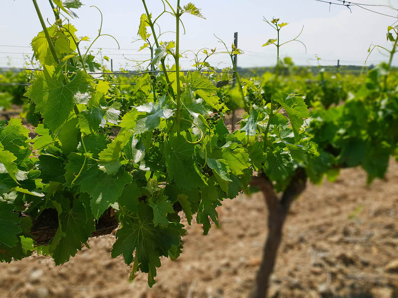 What to Do in the Costa Brava For Wine Lovers