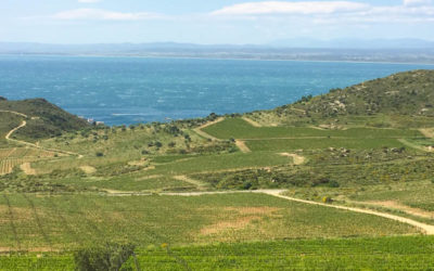 Celler Espelt Viticultors – Alt Emporda Wineries