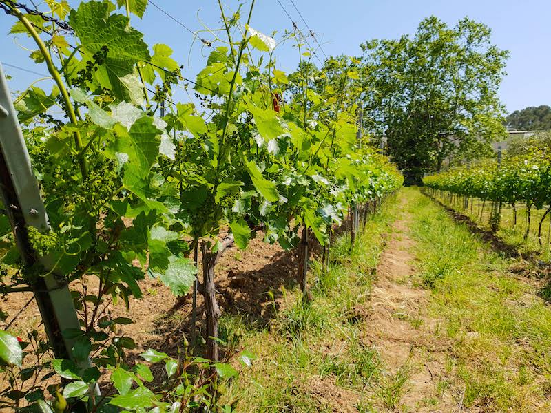 Baix Emporda Wineries
