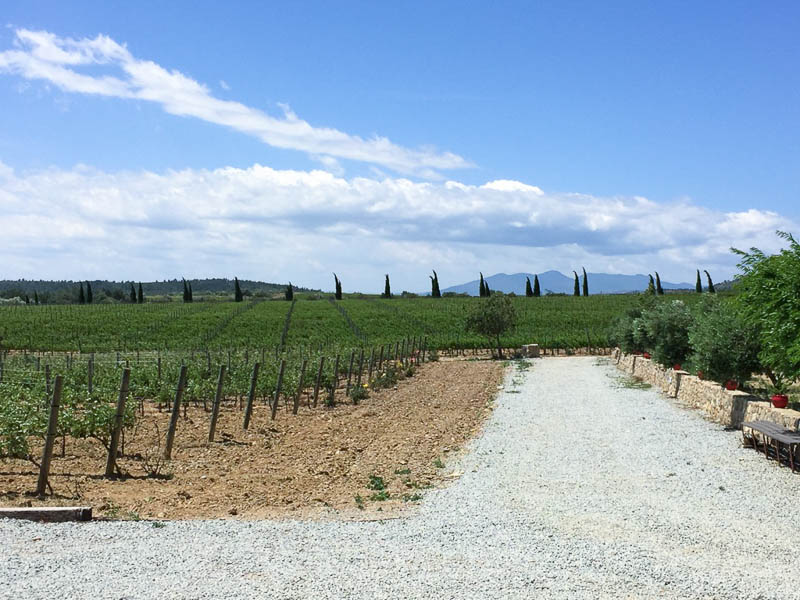 The Ultimate Guide to Alt Emporda – Where to Stay and Drink Wine
